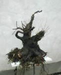 CONTACT= manubonsai@yahoo.com.br 2005-a1-123x150